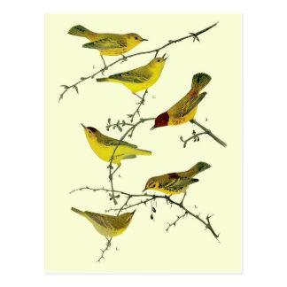 Yellow birds postcard