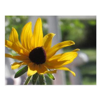 Yellow Black-Eyed Susan Wildflower Postcard