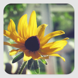 Yellow Black-eyed Susan Wildflower Square Sticker