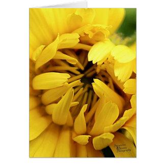 Yellow Bloom (5.0) Card