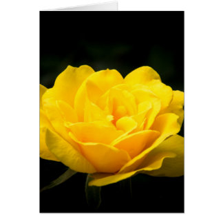 Yellow Blossom Isoloated Card