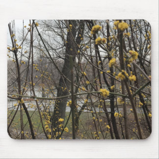 Yellow Blossoms New York City Central Park Trees Mouse Pad