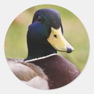 Yellow & Blue Duck Sticker