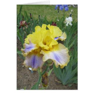 Yellow Blue Iris Small Blank Card
