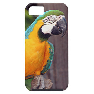 Yellow & blue macaw bird iPhone 5 cases