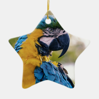 Yellow Blue Macaw Parrot Ceramic Ornament