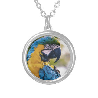 Yellow Blue Macaw Parrot Silver Plated Necklace