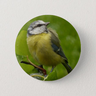 Yellow Breasted Robin 2 Inch Round Button