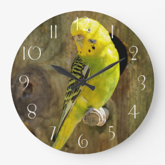 Yellow budgie large clock