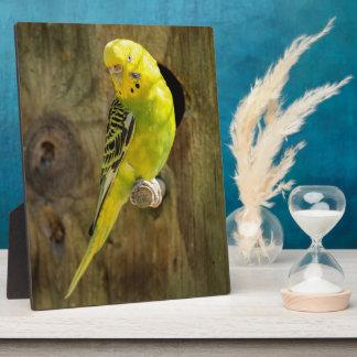 Yellow budgie plaque