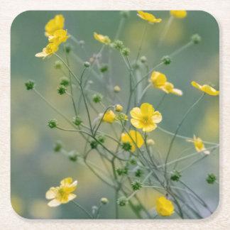 Yellow buttercups square paper coaster