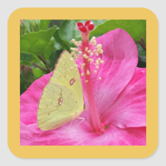Yellow Butterfly & Pink Flower, square sticker