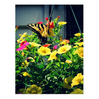 Yellow Butterfly with Flowers Photo Postcard