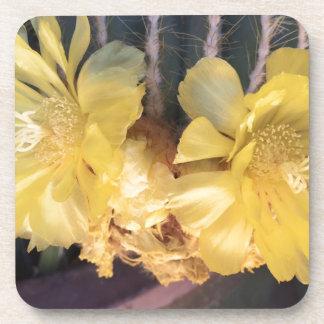 Yellow cactus flower coasters