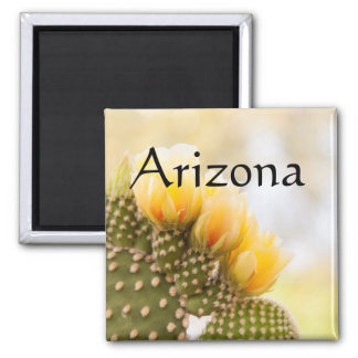 Yellow cactus flowers as they bloom, Arizona Magnet