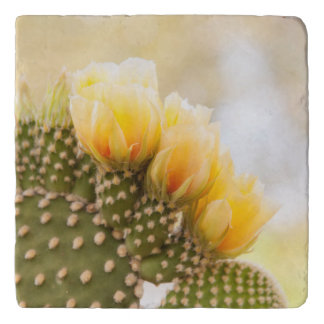 Yellow cactus flowers as they bloom in  Arizona Trivet