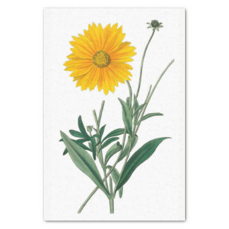 "Yellow Calendula Floral 10"" X 15"" Tissue Paper"