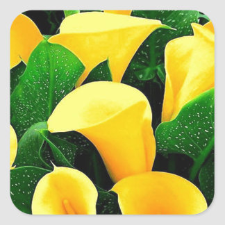 Yellow Calla Lilies Square Sticker