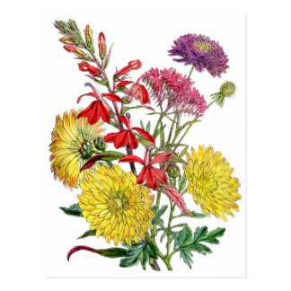 Yellow Chrysanthemums and purple Scabiosa Flower Postcard