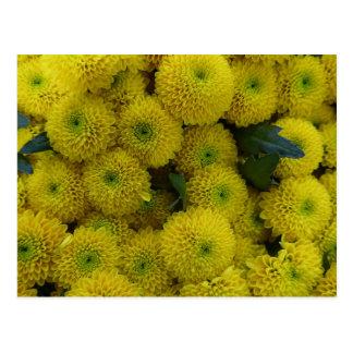 Yellow chrysanthemums card
