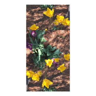 yellow colored tulip type flowers in spring card