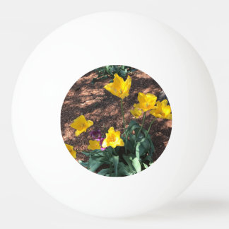 yellow colored tulip type flowers in spring ping pong ball