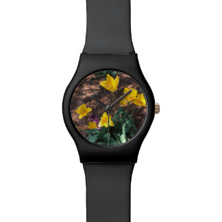 yellow colored tulip type flowers in spring watch