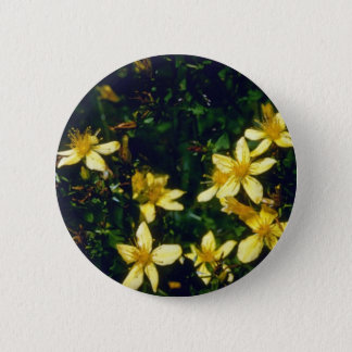 yellow Common St. John-Swort (Hypericum Perforatum 2 Inch Round Button