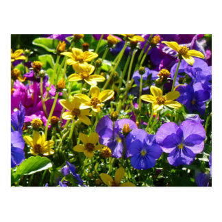 Yellow Coreopsis and Purple Violas Colorful Floral Postcard