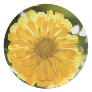 Yellow cosmo party plates