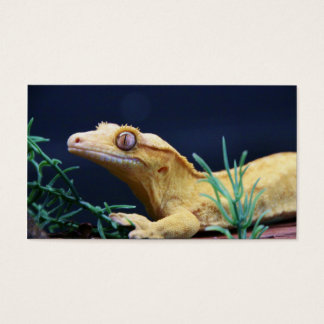 Yellow Crested Gecko Resting Business Card
