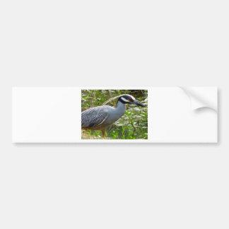 Yellow Crown Night Heron Bumper Sticker