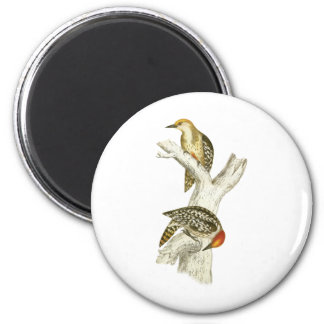 Yellow-crowned or Mahratta Woodpecker 2 Inch Round Magnet