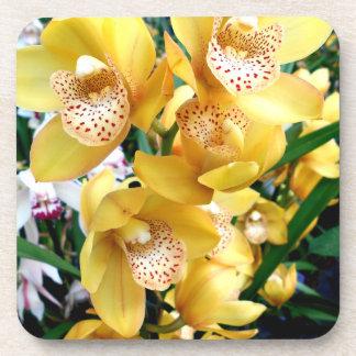 Yellow Cymbidium Orchids Coaster