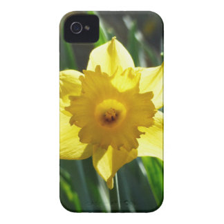 Yellow Daffodil 02.2_rd iPhone 4 Cases