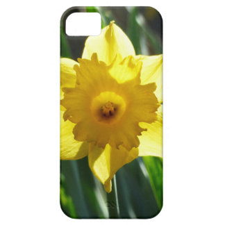 Yellow Daffodil 02.2_rd iPhone 5 Cases