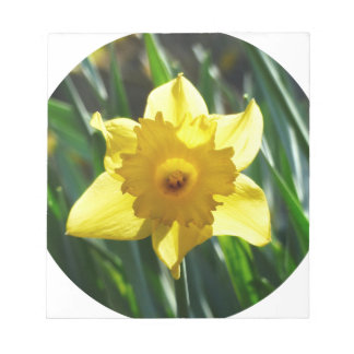 Yellow Daffodil 02.2_rd Notepad