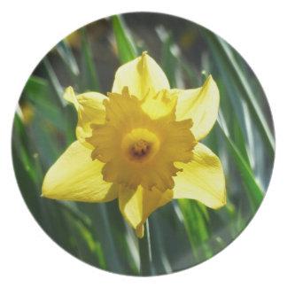 Yellow Daffodil 02.2_rd Plate