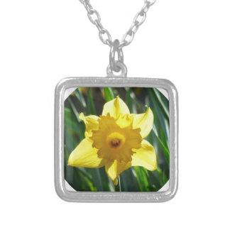 Yellow Daffodil 02.2_rd Silver Plated Necklace