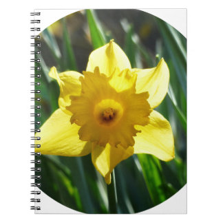 Yellow Daffodil 02.2_rd Spiral Notebook