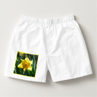 Yellow Daffodil 02.3. Boxers