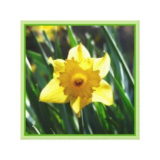 Yellow Daffodil 03.0.g Canvas Print