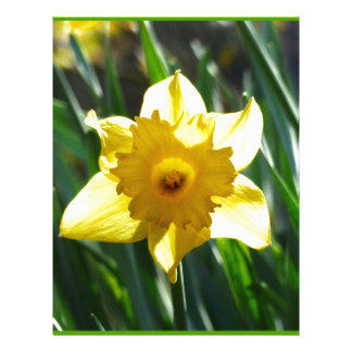 Yellow Daffodil 03.0.g Customized Letterhead