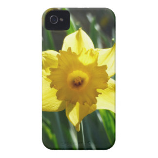 Yellow Daffodil 03.0.g iPhone 4 Covers
