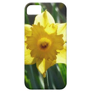 Yellow Daffodil 03.0.g iPhone 5 Case