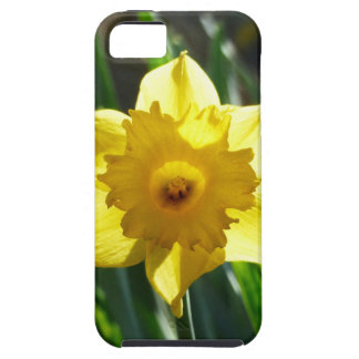 Yellow Daffodil 03.0.g iPhone 5 Cover