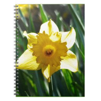 Yellow Daffodil 03.0.g Note Books