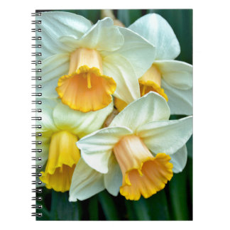 Yellow daffodil flowers notebook