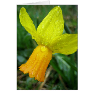 Yellow Daffodil Note Card