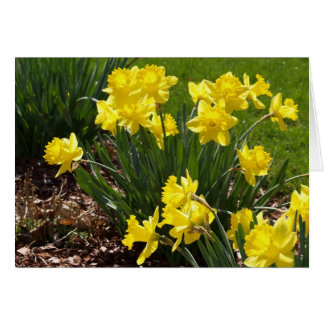 Yellow Daffodils Note Card
